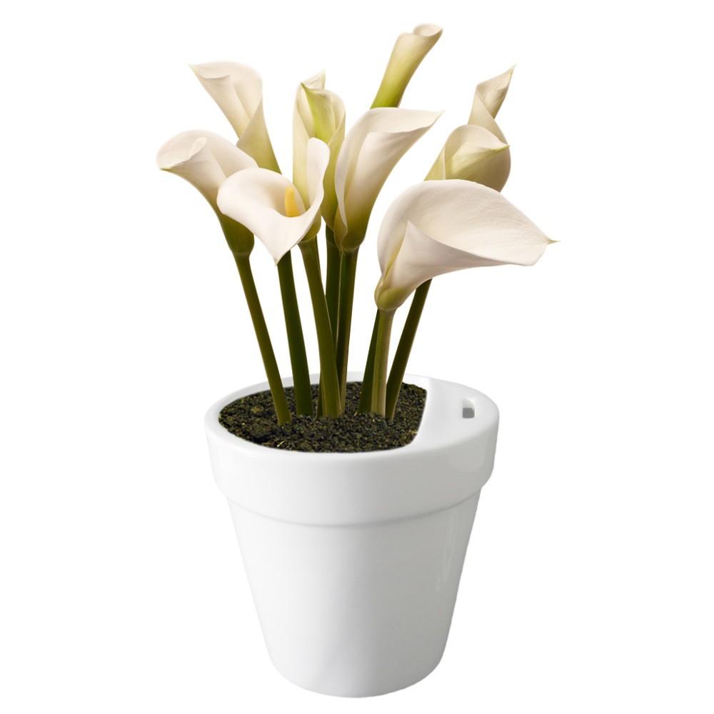 Blumentopf-Spardose