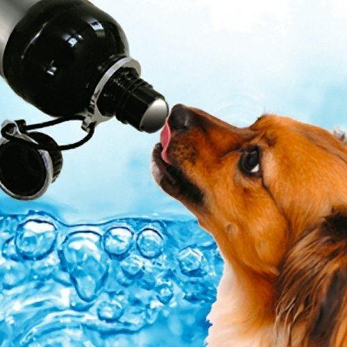 Trinkflasche für den Hund weiß