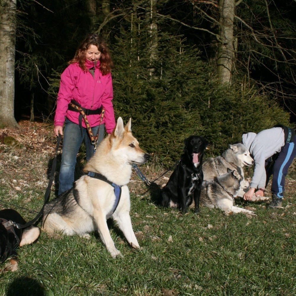 Wandern mit Huskys - Kollnburg