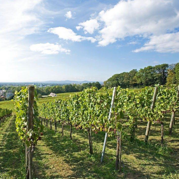 Weinseminar oder Weinprobe - Freiburg