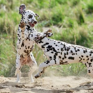 Action-Fotoshooting für Hunde - Raum Eberswalde