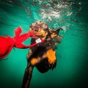"""Fotoshooting """"Hund unter Wasser"""" - Düsseldorf"""