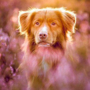 Haustier und Pferde-Fotoshooting - Mehlingen