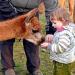 Lama-/ Alpakapatenschaft - Mittenwalde
