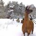 Schnupperwanderung mit Lamas - Mittenwalde